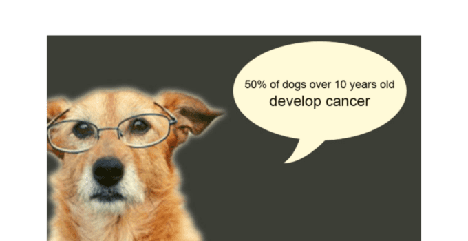 Cancer In Dogs Causes Symptoms Diagnosis Treatment Weight