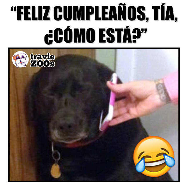 Doge Meme Vs Cheems Meme Perro Grande Perro Chico Memes En Espanol La Mejor Recopilacion De Memes Lo Mas Viral De Int Memes Memes Perros Memes Divertidos