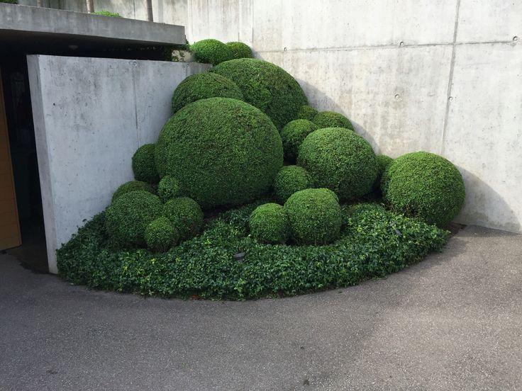 Perfect Buxus Buxus Gartenkunst Perfect Garten Grundriss Garten Anpflanzen Garten