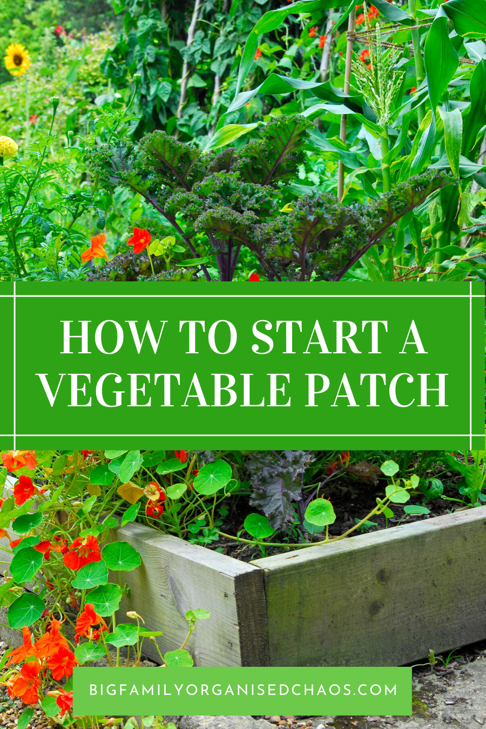 4 Vegetable Garden Tips for Beginners is part of Vegetable garden tips, Starting a vegetable garden, Gardening for kids, Gardening tips, Veg patch, Growing vegetables - With food not as easy to get hold off at the moment, check out these Vegetable Garden Tips for Beginners if you want to grow your own