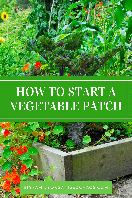 4 Vegetable Garden Tips for Beginners – Vegetable garden tips