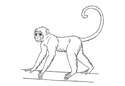 How To Draw A Monkey Step By Step By Monika Zagrobelna Howtophotoshopstepbystep In 2020 Monkey Drawing Monkey Drawing Easy Drawings