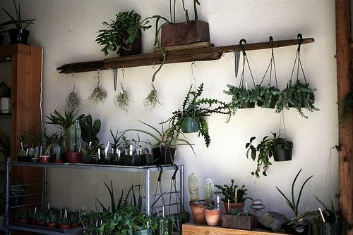 plant wall (Photo by Brian Ferry)