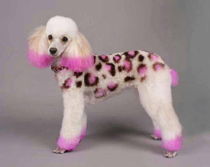 Castle Creek Pet Resort And Spa Pet Resort Pink Dog Pets