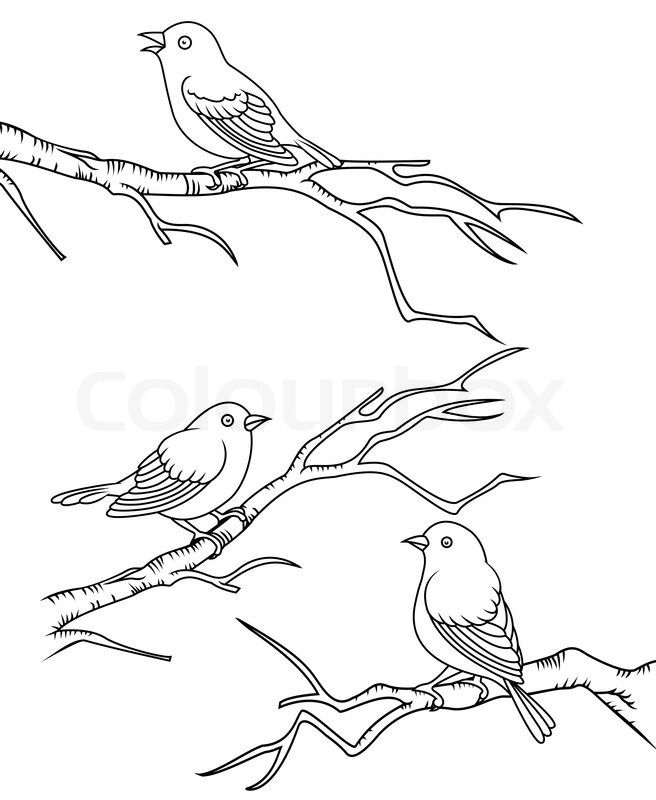 Bird Sitting On Tree Drawings Google Search Group Murals