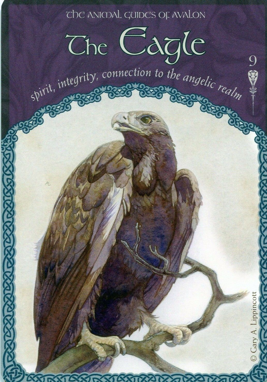 Animal spirit guides image by lisa diaz terriquez on