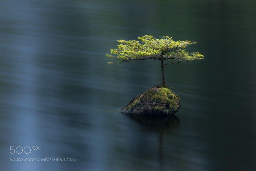 Fairy Lake Hemlock by AdamGibbs. Please Like http://fb.me/go4photos and Follow @go4fotos Thank You. :-)