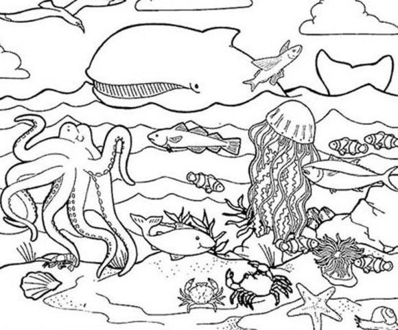 Habitat Coloring Pages Of Sea Animals Ocean Coloring Pages
