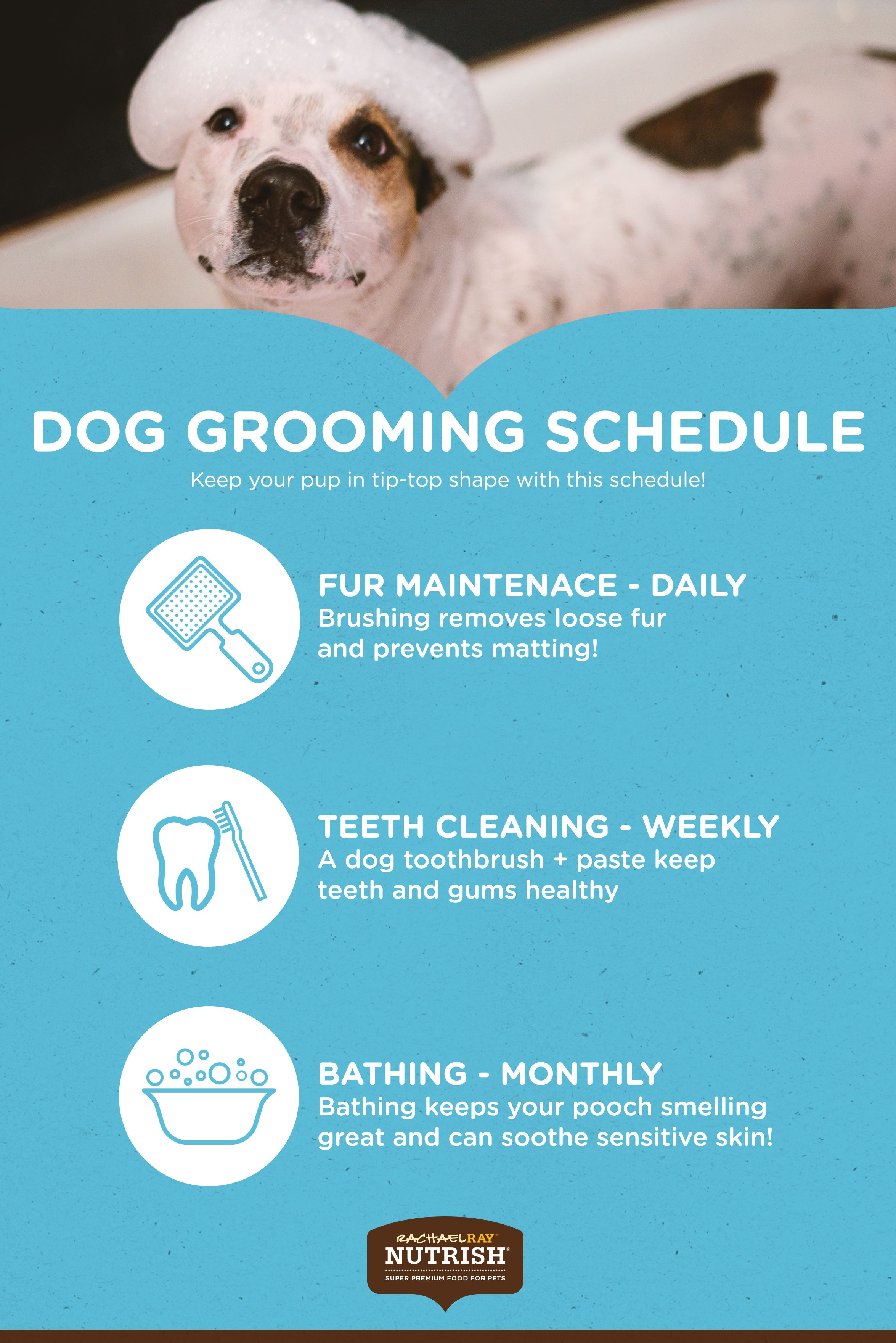 A Well Groomed Dog Is A Healthy Dog And A Healthy Dog Makes Happy