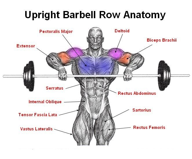 Upright Barbell Row Anatomy | Workout Illustrations | Pinterest ...