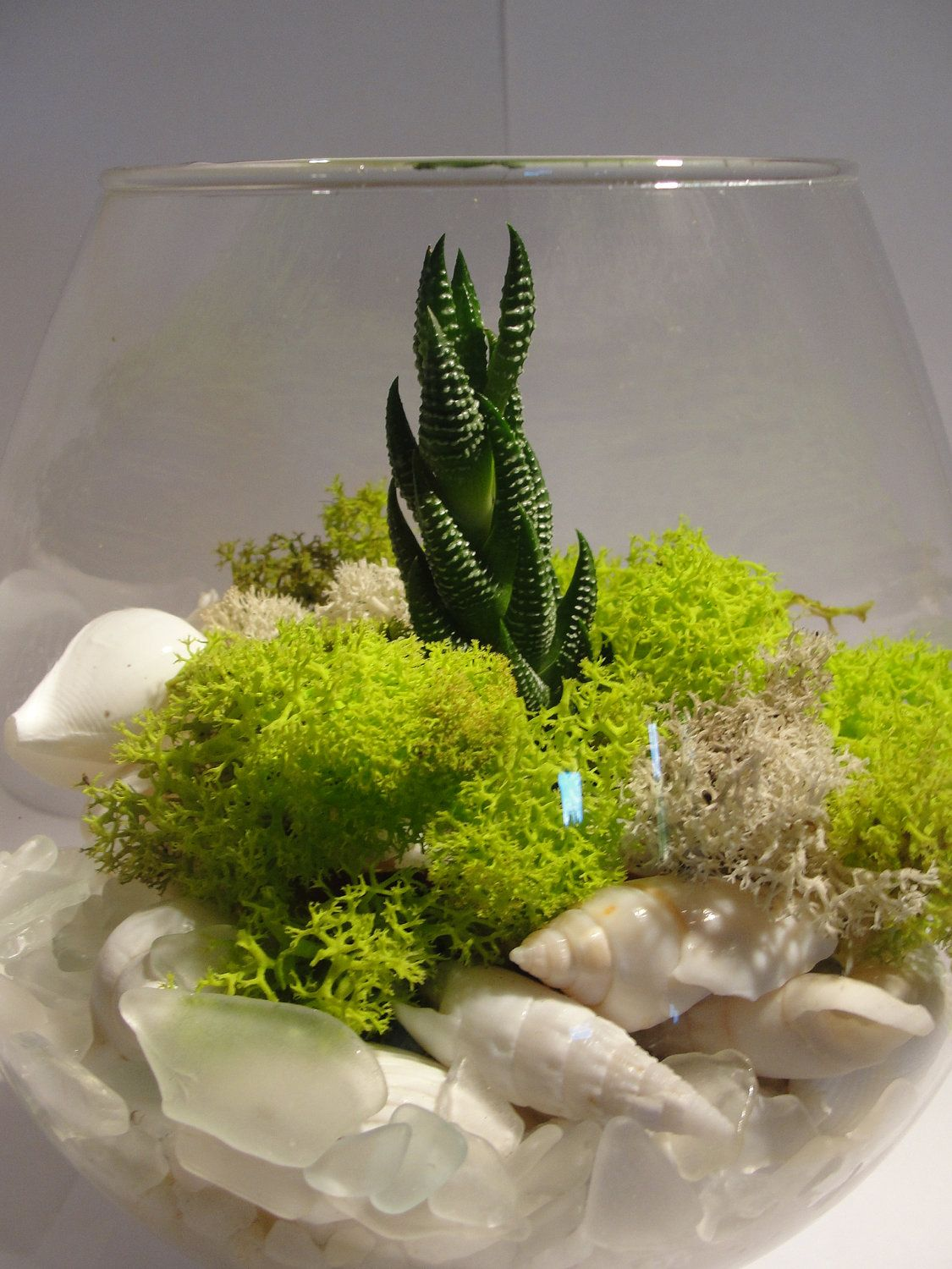Succulent terrarium kit with shells moss terrarios for Terrario vertical
