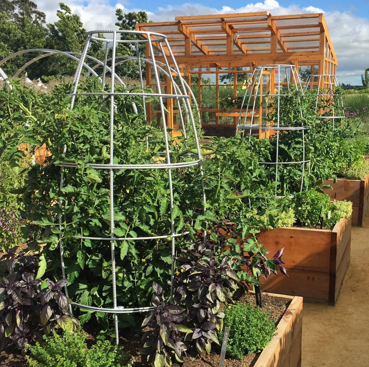 Edible Landscape Design: Gorgeous Heirloom Tomatoes + Toki Bubble Trellis = Haute