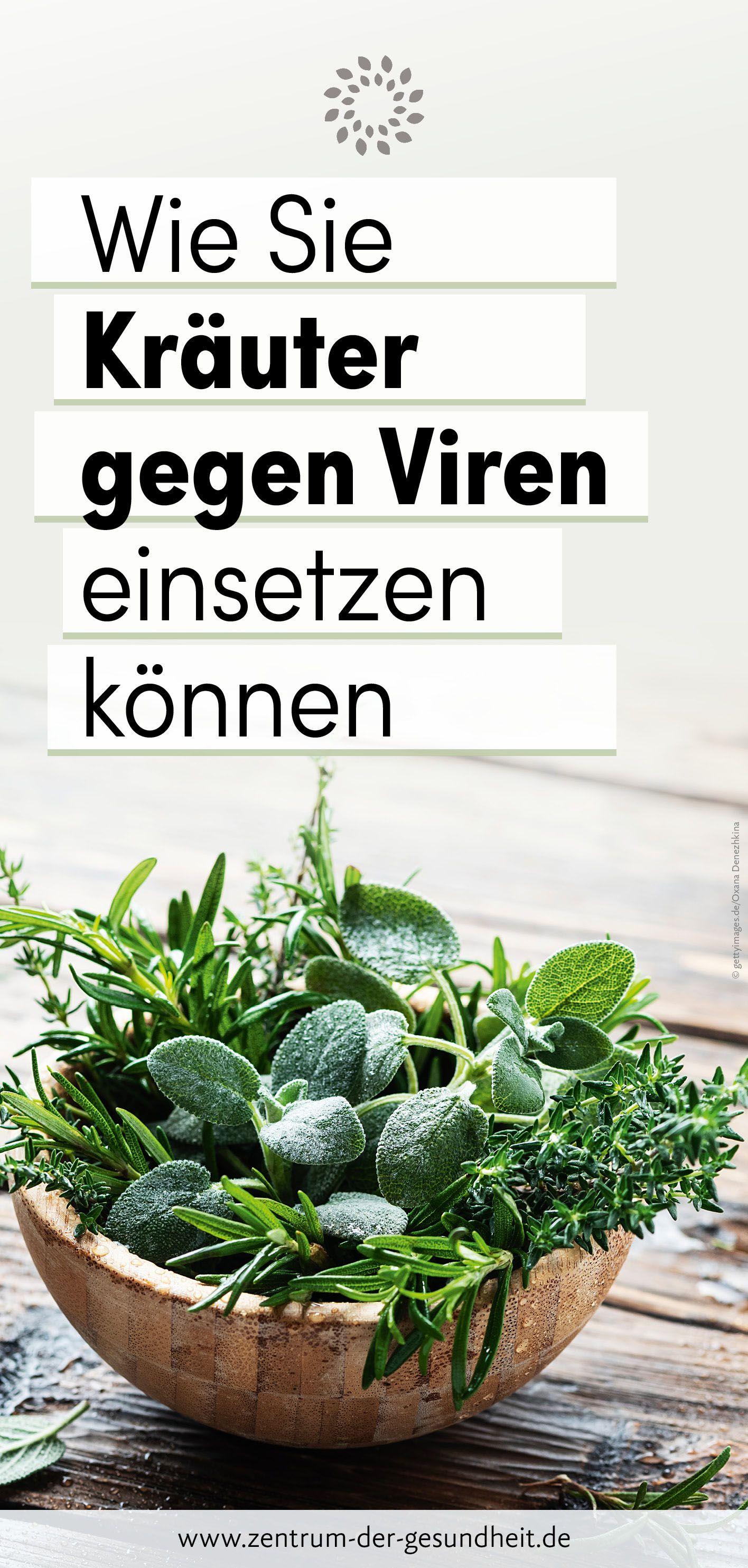 Kaum jemand weiss, welche Kräuter oder auch Gewürze im Kampf gegen Viren eingesetzt werden können. Wir erklären, welche Kräuter eine Anti-Virus-Wirkung haben und wie Sie diese anwenden können. #Kräuter #Viren #natürlich #Gesundheit #selbstmachen