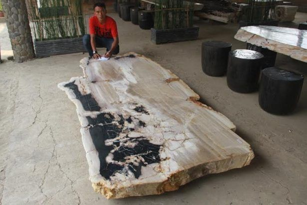 Charmant Countertops Petrified Wood Countertop For Sale Table Top Slab Beautiful