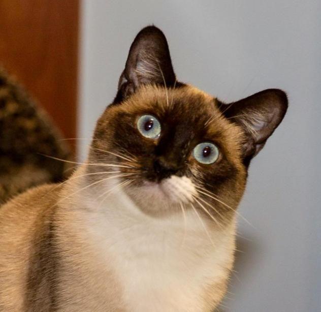 Adopt Suzanne on Adoption, Kitty, Pets