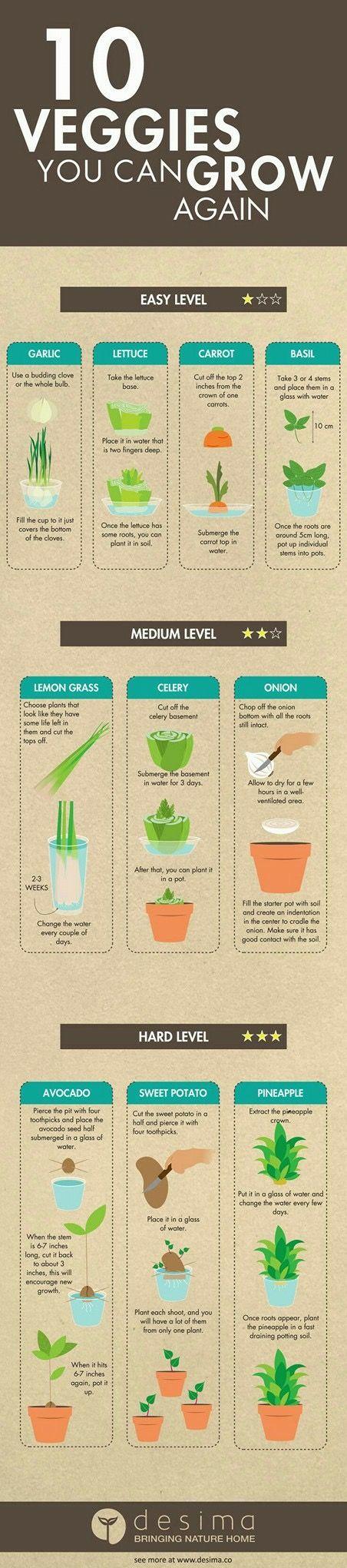 10 veggies you can grow again #avocado seed growing without toothpicks #Grow #Veggies
