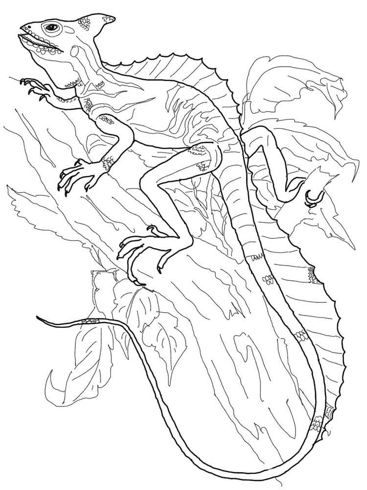 Lizards Coloring Page Animal coloring pages, Coloring