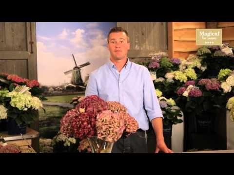 hortensien trocknen deko ideen mit flora shop youtube gartenkunst hortensien trocknen. Black Bedroom Furniture Sets. Home Design Ideas