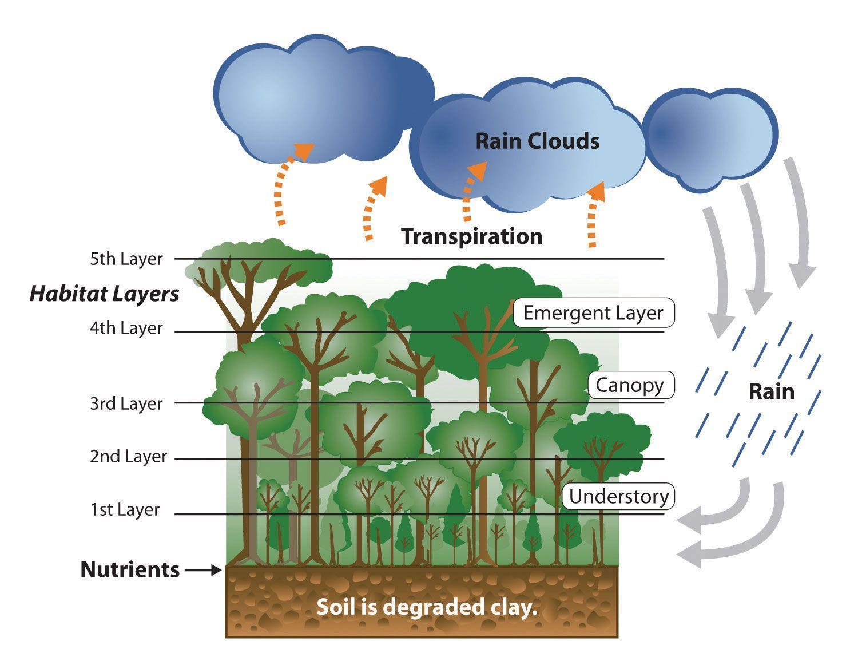Image Result For Forest Ecosystem