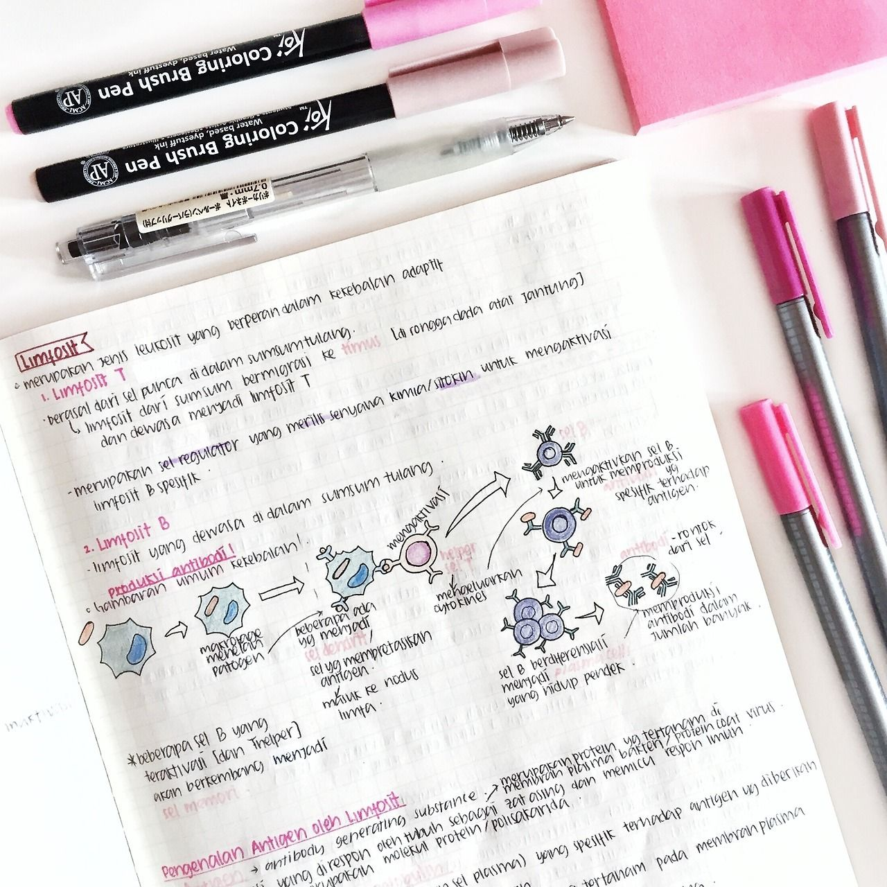 Rairaifh Pink Themed Immune System Notes