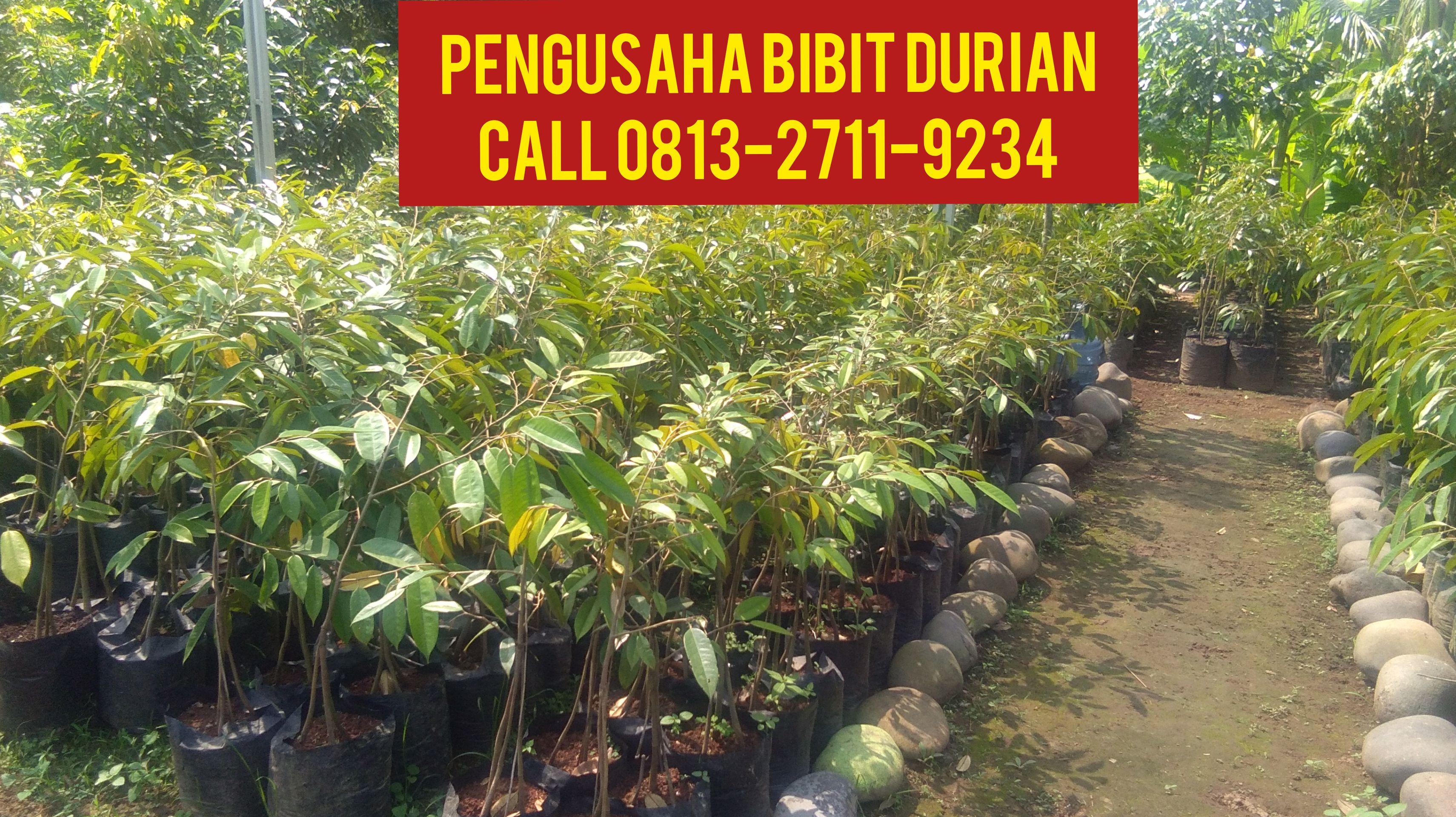 Kebun Durian Riau