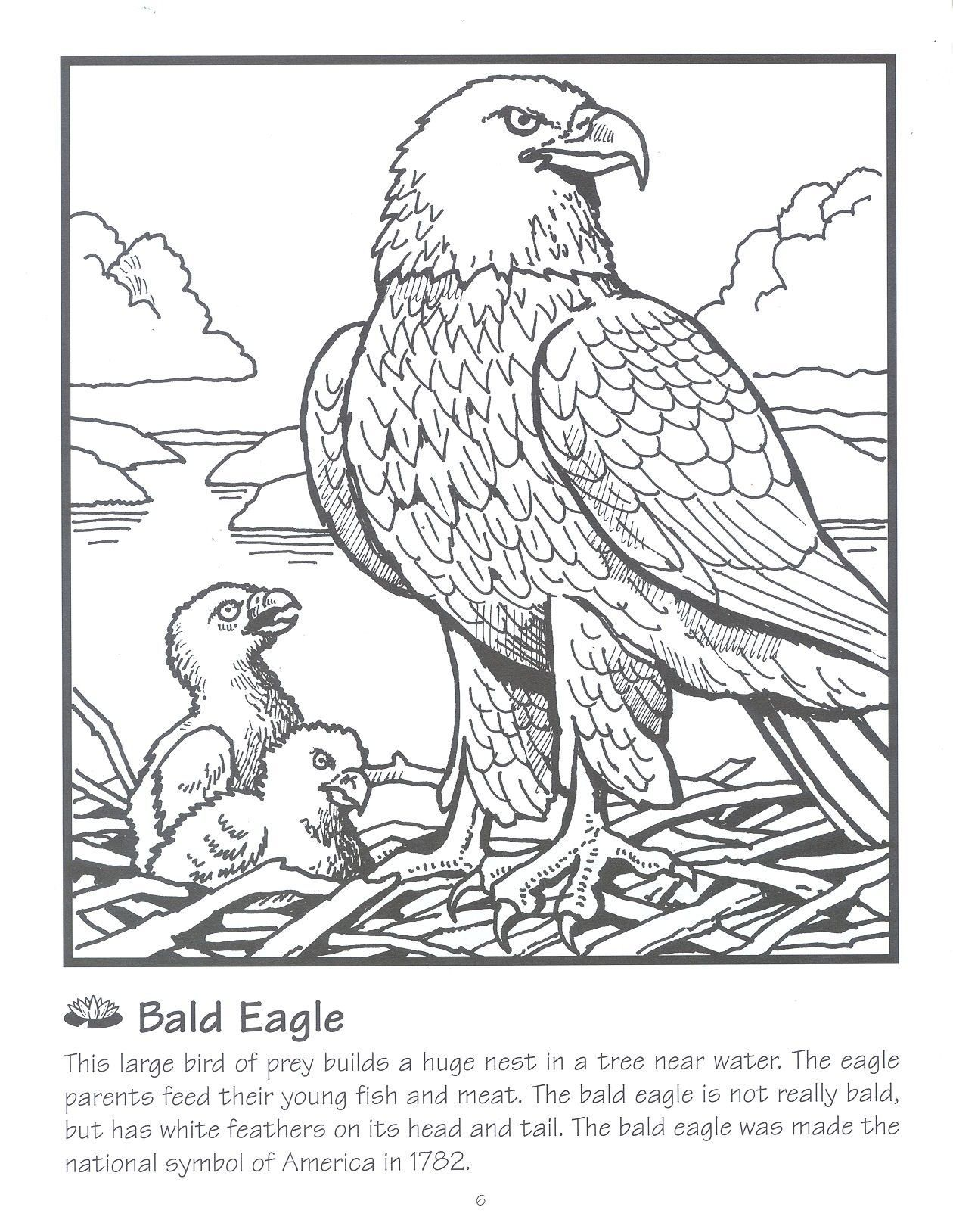 Pin On E Is For Eagle
