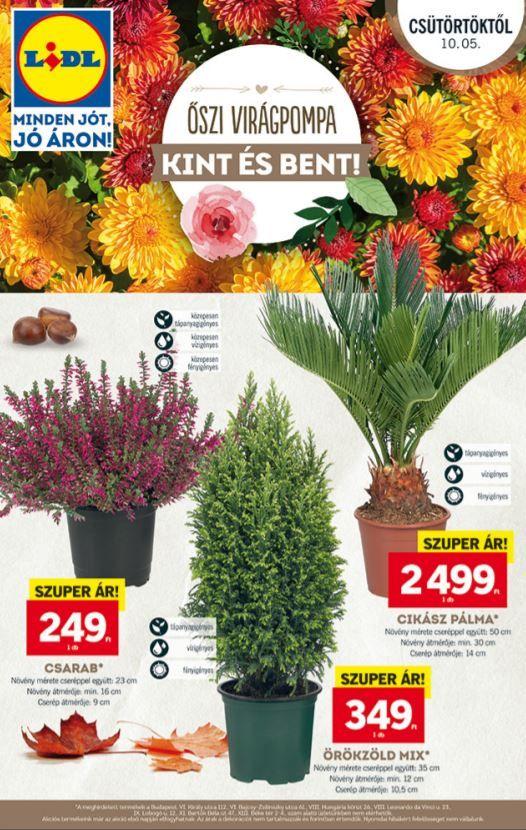 Lidl Akciós Újság 2017 október 5-11-ig  Kinti és benti virágözön 8b53ff7a2a