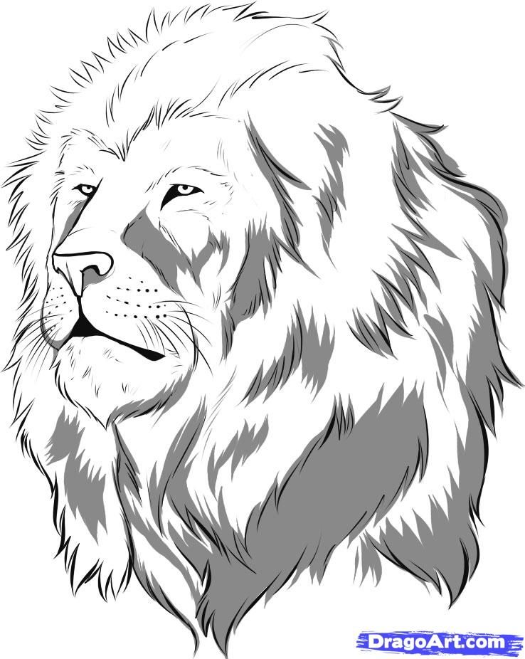 how to draw a realistic lion step 8 | Lion coloring pages ...