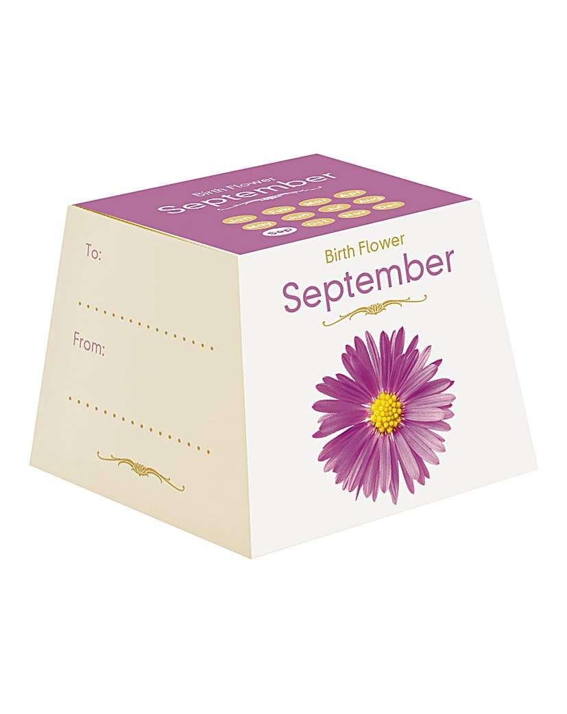 Birth Flowers September Birth Flowers September Every Month Has A