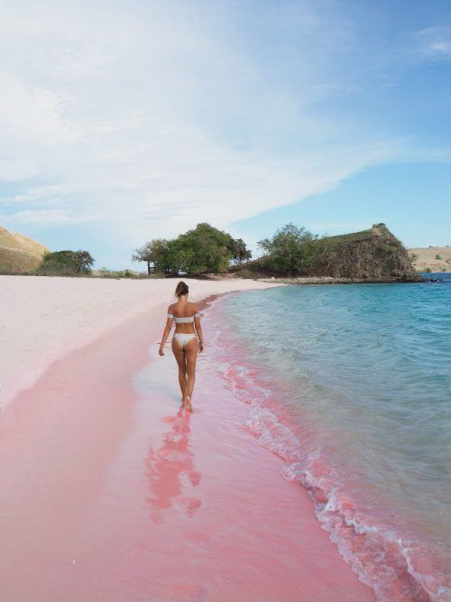 Pink Beach , Komodo Island. The crystal clear water and pink sand make this beach one of a kind