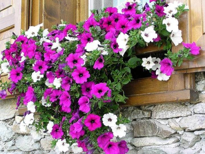 Balcones floridos fotos buscar con google jardines - Plantas de exterior resistentes al calor ...