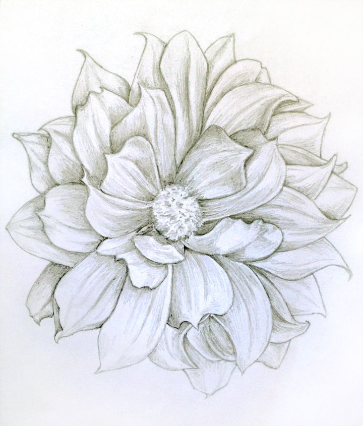 Pin By Katie Novak On Dahlia Sunflower Rose Daisy Anemone Artwork Dahlia Tattoo Flower Drawing Dahlia Flower Tattoos