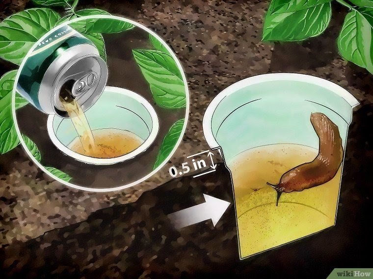 4 ways to get rid of garden slugs wikihow with images