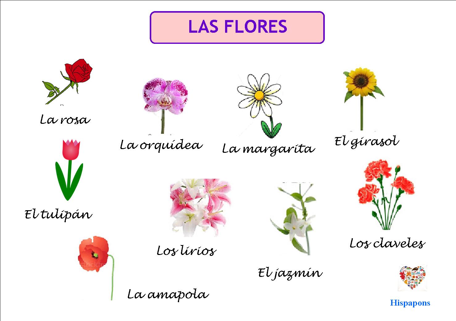 El Vocabulario De Las Flores Hispapons Colegio Js Pons