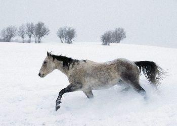 Free Snow Screensaver Horse Free Winter Snow Run Horse Wallpaper Download Free Screensavers Horses In Snow Horse Wallpaper Horses