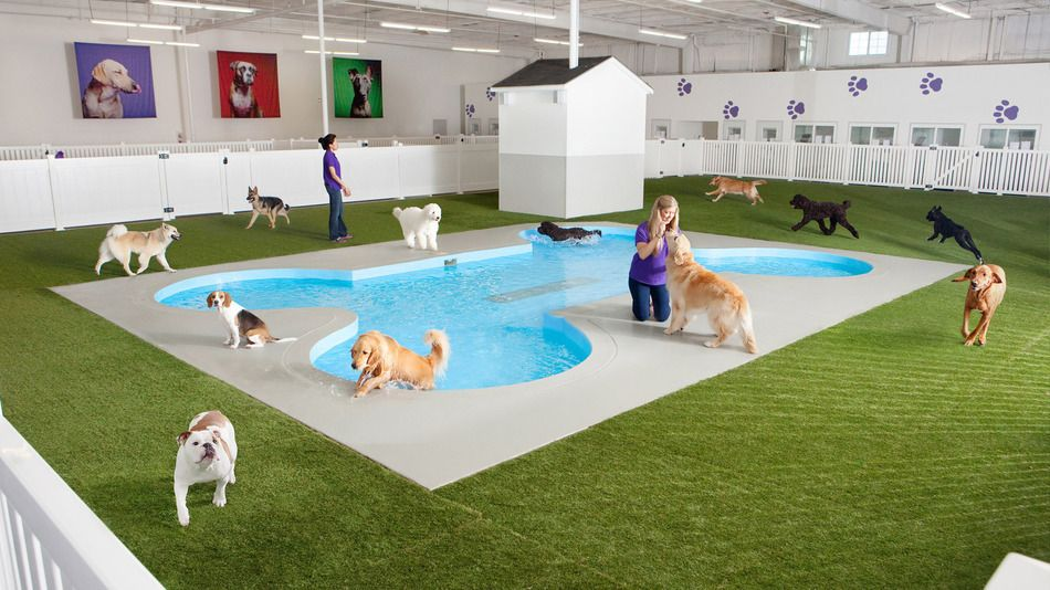 Rich People S Pets Will Soon Have A Better New York City Airport Terminal Than You Pet Hotel Pet Resort Luxury Pet