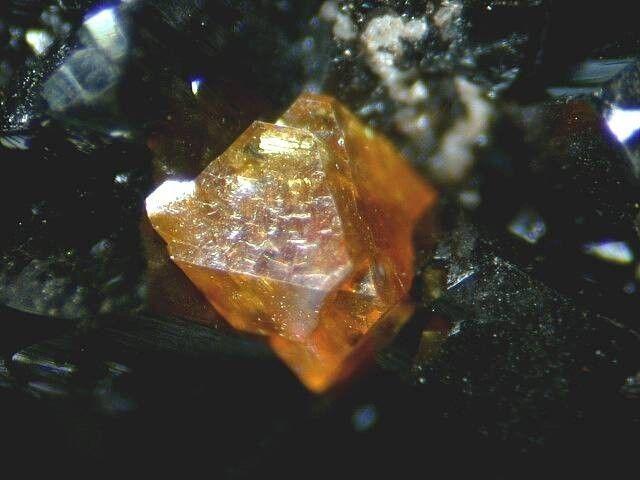 Natanite sur Ilvaite. El Potosí Mine, Francisco Portillo, West Camp, Santa Eulalia District, Chihuahua, Mexique FOV=1.4 mm Photo Jason B. Smith