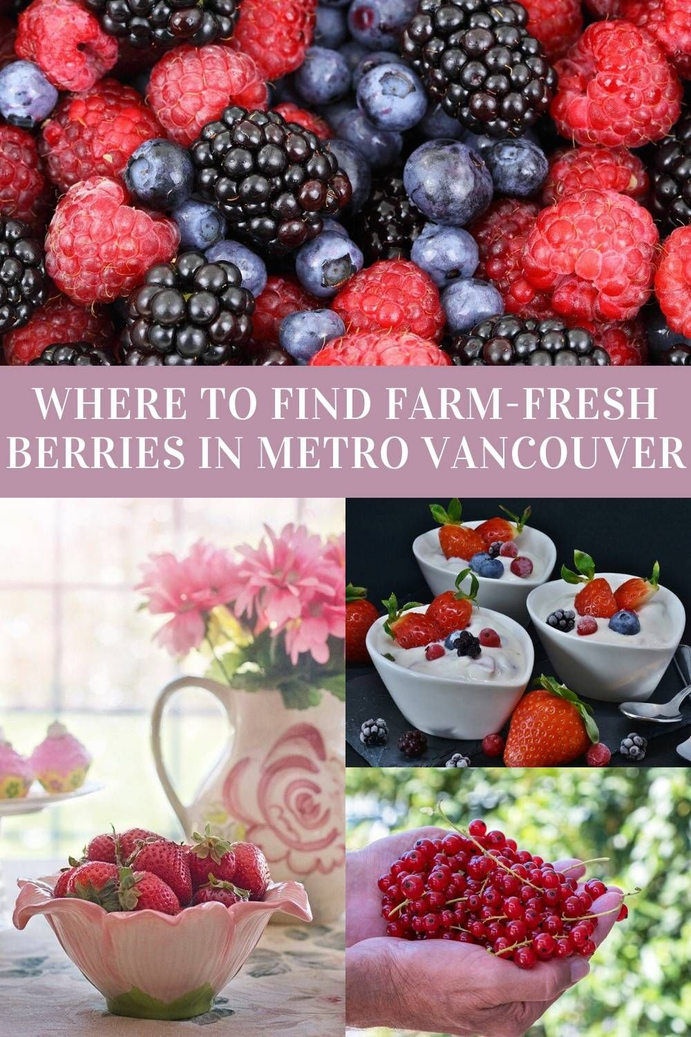 Where To Find The Best Berries In Metro Vancouver In 2020 Fresh Berries Berry Seasons Blueberry Season