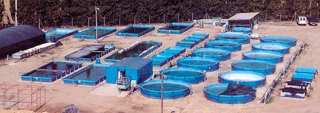 Empresa de piscicultura exterior con piscinas especiales Piscinas para tilapias