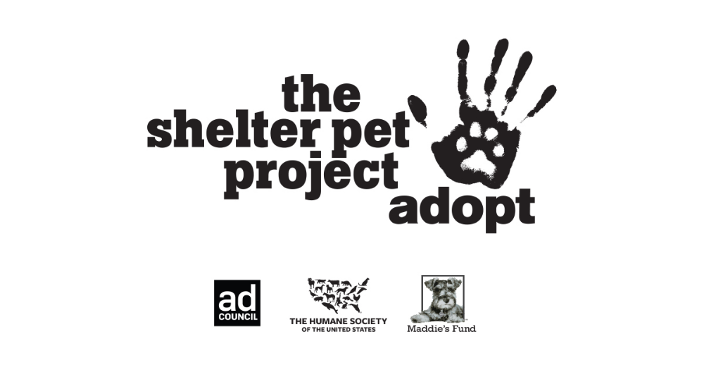 Adopting a pet from a shelter or rescue is a winwin, for