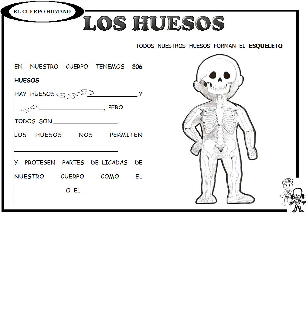 dibujos de los huesos del cuerpo humano para imprimir - Buscar con ...