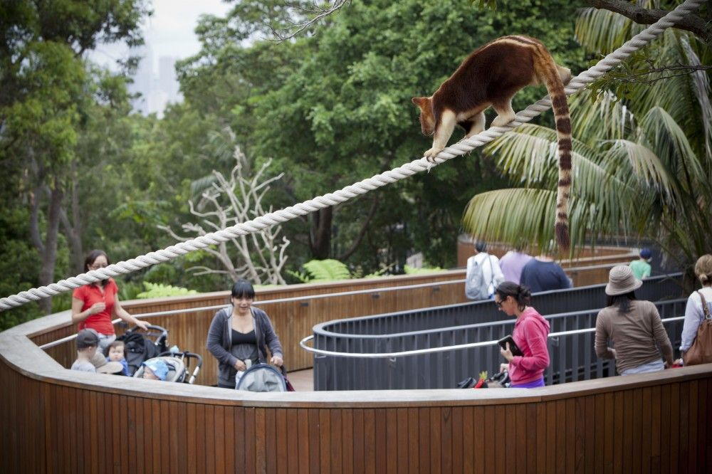 Gallery of Taronga Zoo / BVN Architecture - 9 | Animal care | Zoo