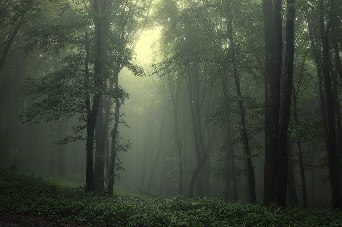 Green forest after rain Wall Mural \u2022 Pixers® \u2022 We live to change