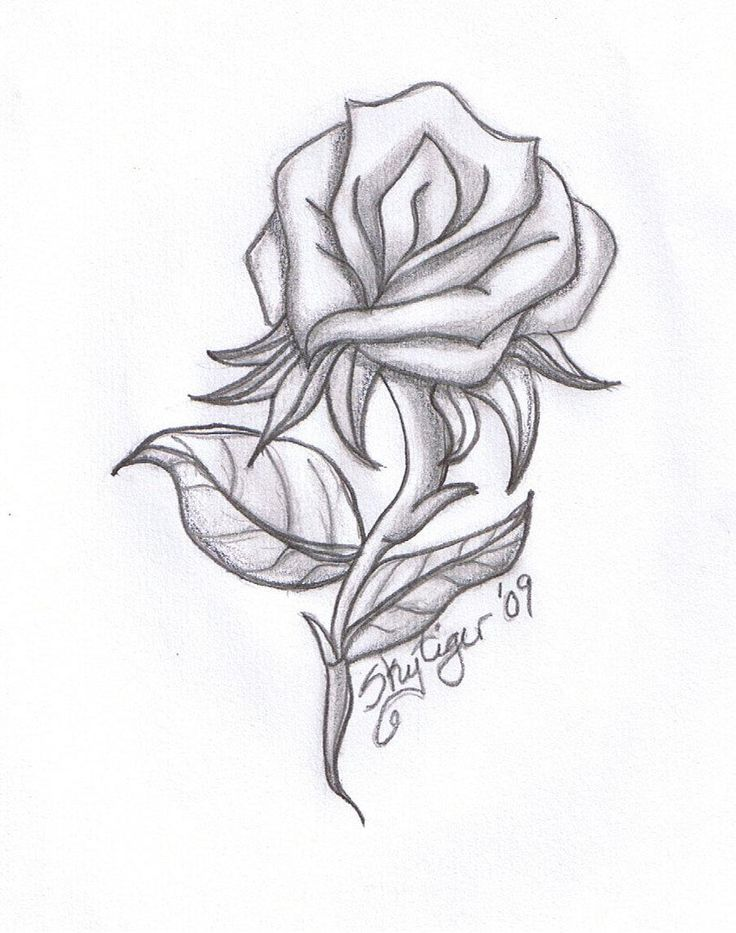 1000 Ideas About Rose Drawings On Pinterest Drawings In Pencil Pencil Drawings For Beginners Roses Drawing Pencil Drawings Of Love