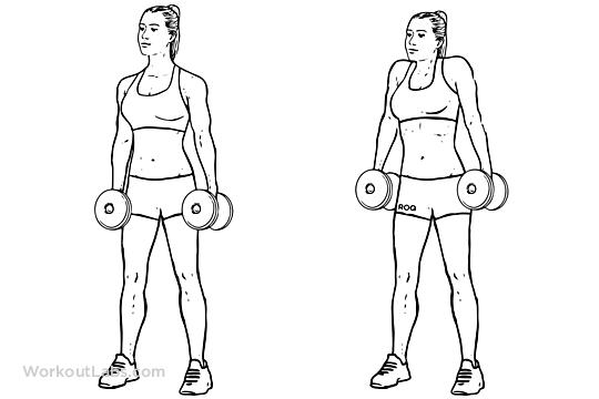 Dumbbell Shrugs (for shoulders) | Shrugs workout, Upper body dumbbell workout, Shoulder workout