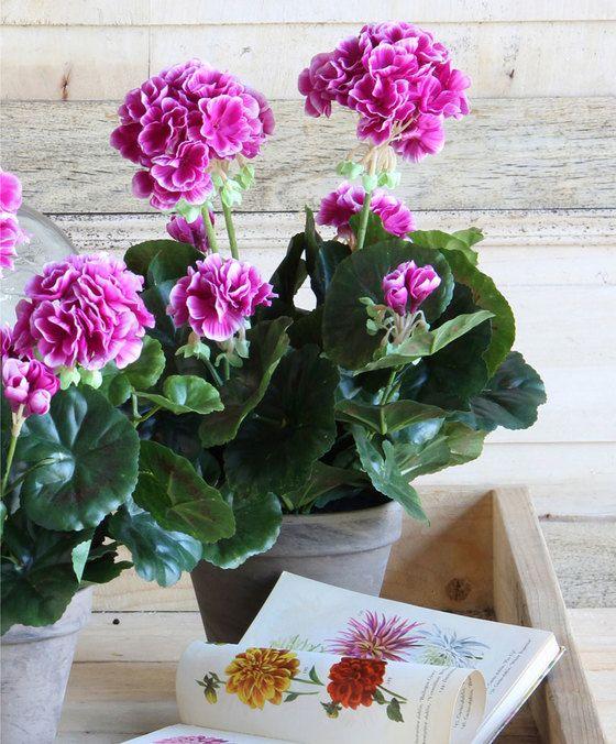 Mica Kunstplant Geranium  U hoeft geen groene vingers te hebben voor deze geranium! De fantastische niet van echt te onderscheiden kunstplant van Mica blijft alle seizoenen mooi! Zet de geranium in de volle zon geef geen water want de kunstplant blijft voor altijd vol in bloei. Zorgeloos genieten van een kleurige bloemenpracht dat is waar het om gaat bij deze Mica Geranium. De bloemen en de geschulpte bladeren zijn een perfecte kopie van het origineel en zijn vrijwel niet van te…