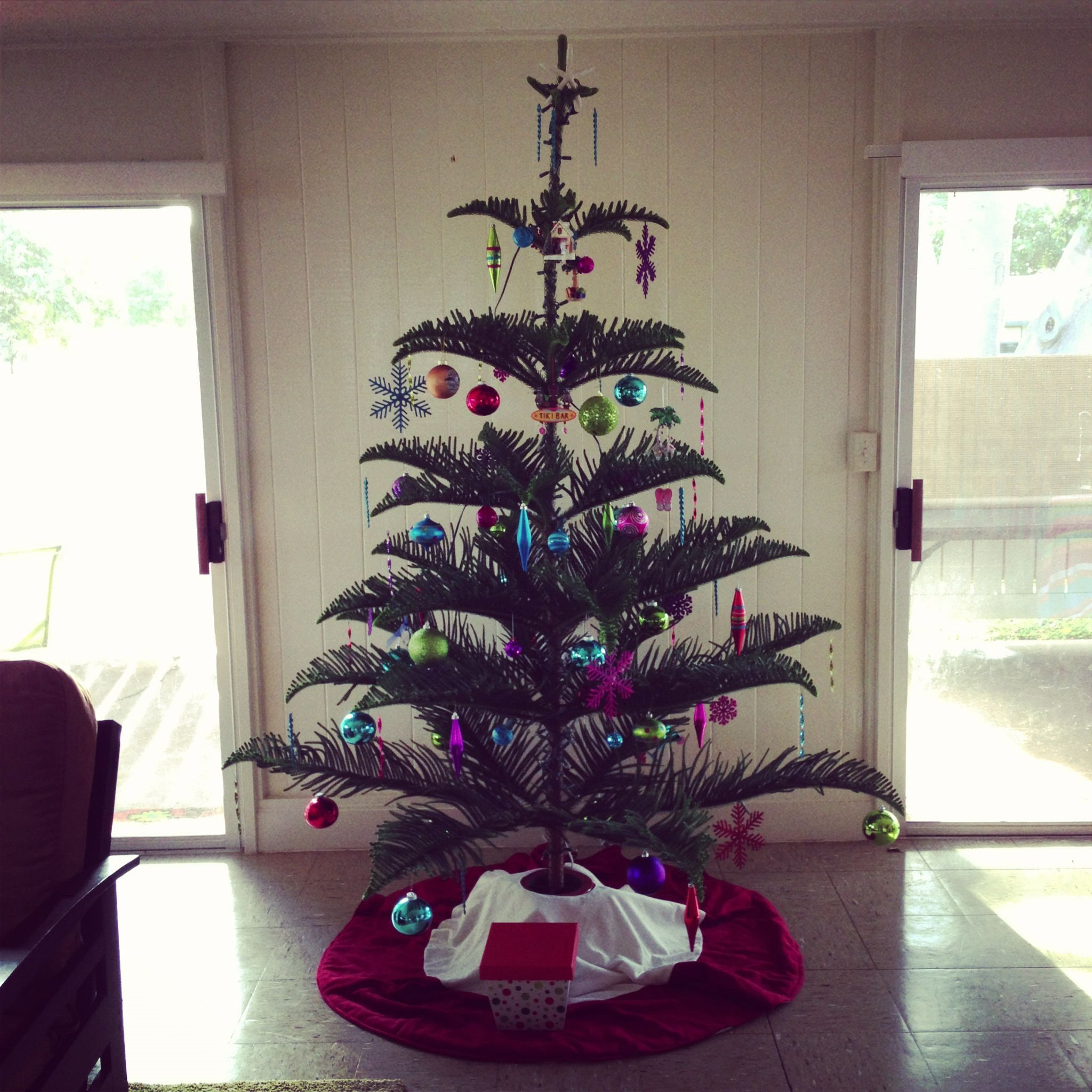 Norfolk Pine Christmas Tree | Christmas | Pinterest | Norfolk ...
