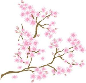 Tudor Nights Hanami The Art Of The Cherry Blossom Gregslistdc Cherry Blossom Pictures Cherry Blossom Clip Art Flower Clipart Images