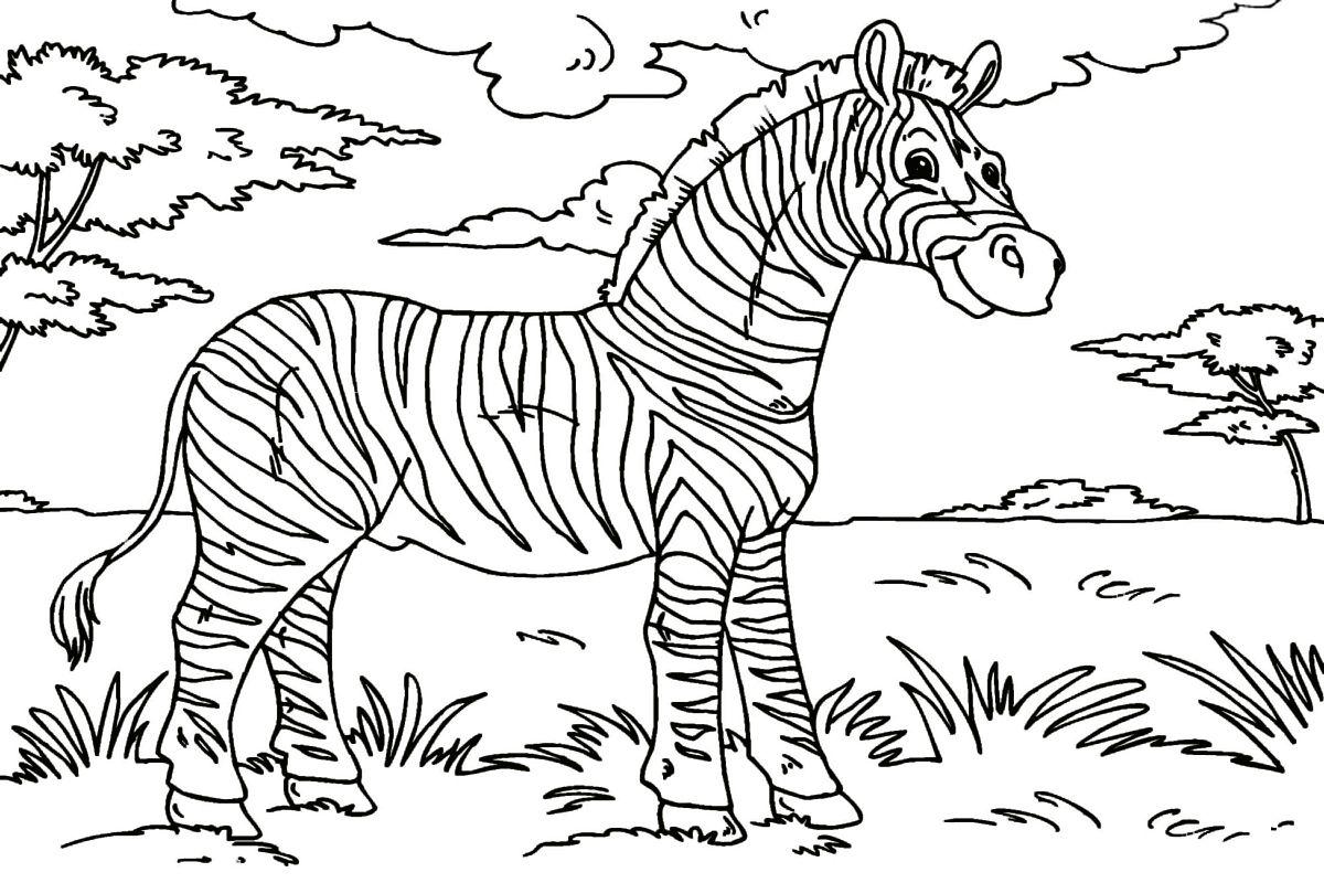 zebra ausmalbilder malvorlagen  zebra coloring pages