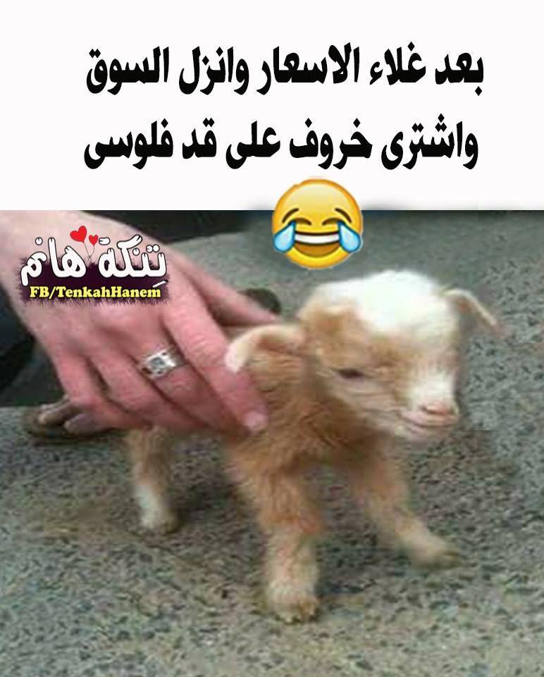 علي قد فلوسي هههههههههه Arabic Funny Arabic Jokes Jokes